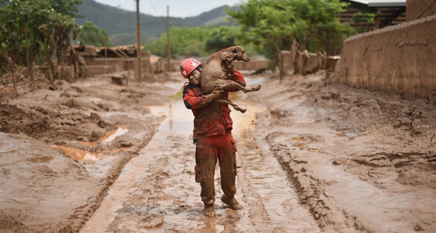 A fireman rescues in Paracatu de Baixo, Minas Gerais, Brazil on November 9, 2015 a dog that was trapped in the mud that swept through the Village of Bento Rodrigues on Thursday killing at least one person and leaving other 26 missing. The tragedy occurred Thursday when waste reservoirs at the partly Australian-owned Samarco iron ore mine burst open, unleashing a sea of muck that flattened the nearby village of Bento Rodrigues. AFP PHOTO / Douglas MAGNO